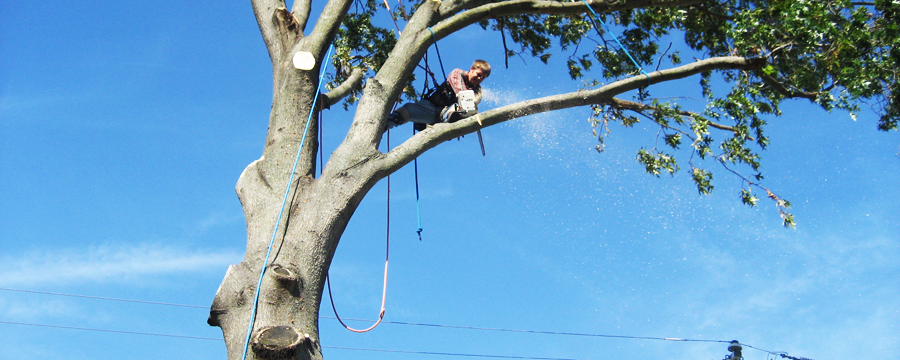 Remove Trees Safely In Your Home - Tree removal | Australian Kitchen